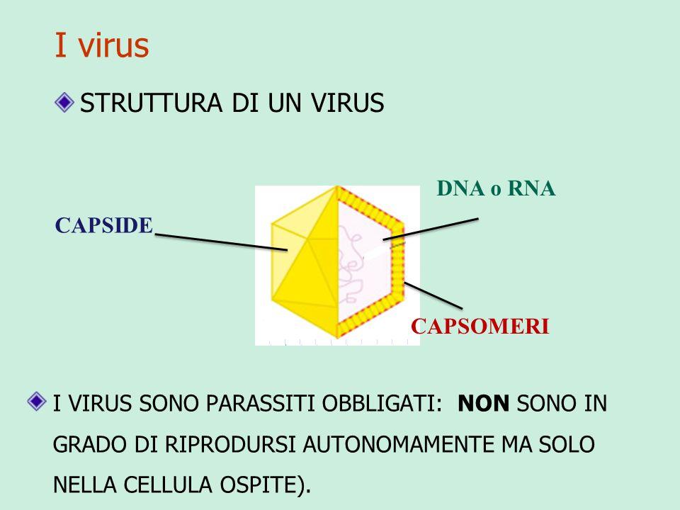 I virus I VIRUS SONO PARASSITI OBBLIGATI: NON SONO IN GRADO DI RIPRODURSI AUTONOMAMENTE MA SOLO NELLA CELLULA OSPITE).