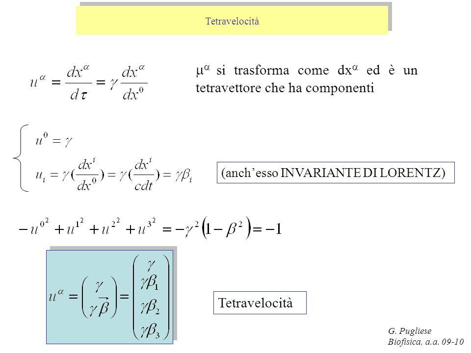 G. Pugliese Biofisica, a.a. 09-10 Tetravelocità (anchesso INVARIANTE DI LORENTZ) si trasforma come dx ed è un tetravettore che ha componenti Tetravelo