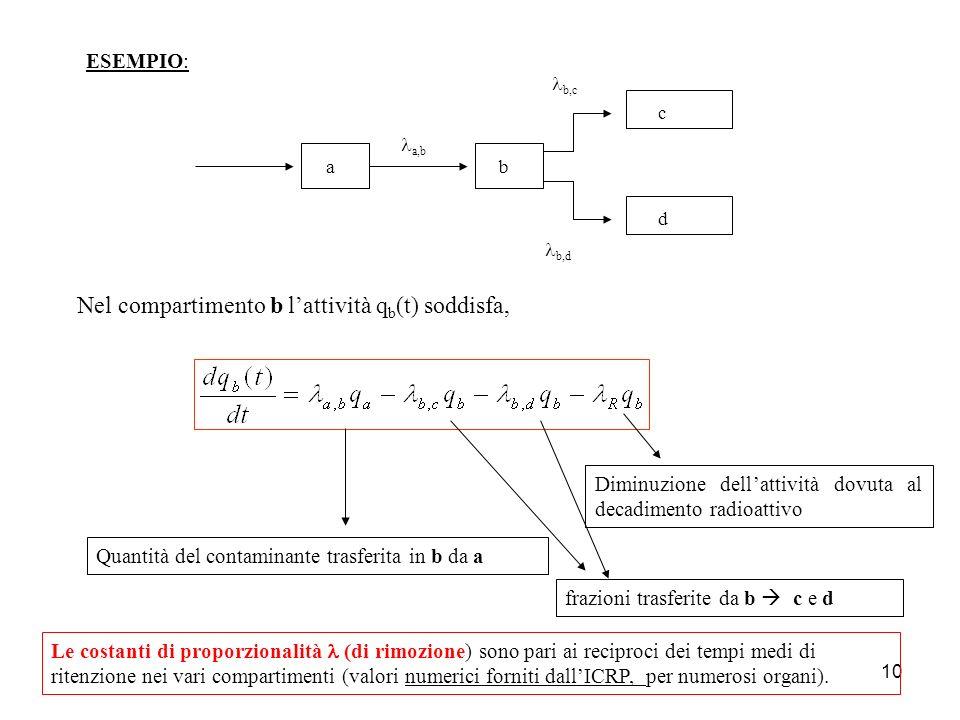 10 c d ba a,b b,c Nel compartimento b lattività q b (t) soddisfa, Quantità del contaminante trasferita in b da a b,d frazioni trasferite da b c e d Di