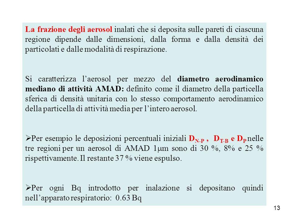 13 La frazione degli aerosol inalati che si deposita sulle pareti di ciascuna regione dipende dalle dimensioni, dalla forma e dalla densità dei partic