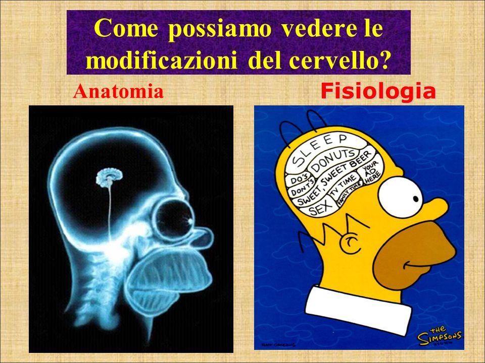 Anatomia Fisiologia Come possiamo vedere le modificazioni del cervello?
