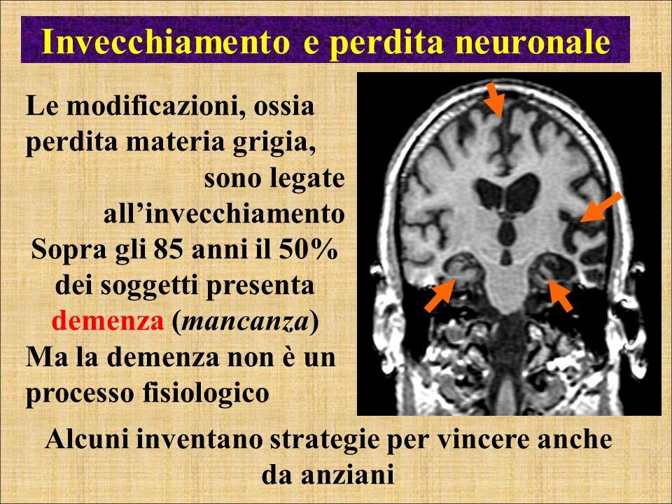 Invecchiamento e perdita neuronale Le modificazioni, ossia perdita materia grigia, sono legate allinvecchiamento Sopra gli 85 anni il 50% dei soggetti