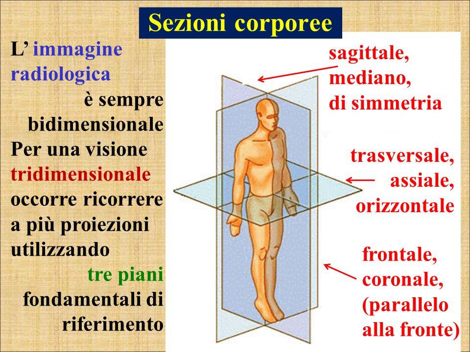 Sezioni corporee L immagine radiologica è sempre bidimensionale Per una visione tridimensionale occorre ricorrere a più proiezioni utilizzando tre pia
