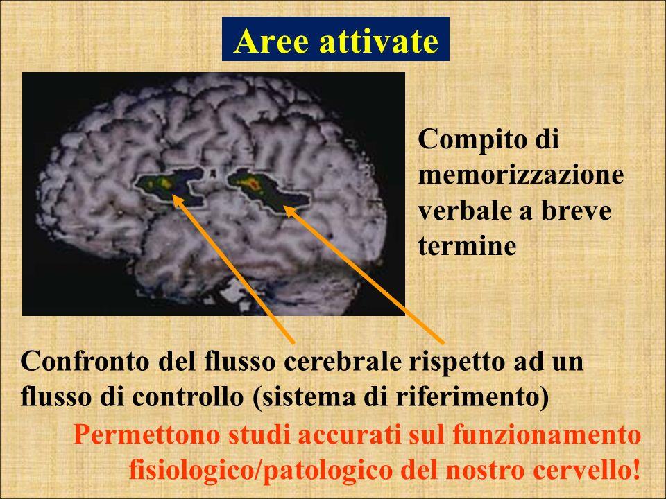 Aree attivate Compito di memorizzazione verbale a breve termine Confronto del flusso cerebrale rispetto ad un flusso di controllo (sistema di riferime