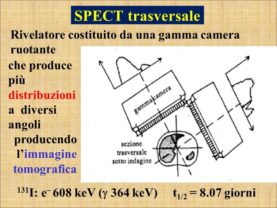 SPECT trasversale Rivelatore costituito da una gamma camera ruotante 131 I: e – 608 keV ( 364 keV) t 1/2 = 8.07 giorni che produce più distribuzioni a