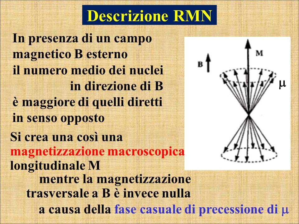 In presenza di un campo magnetico B esterno il numero medio dei nuclei in direzione di B è maggiore di quelli diretti in senso opposto Si crea una cos