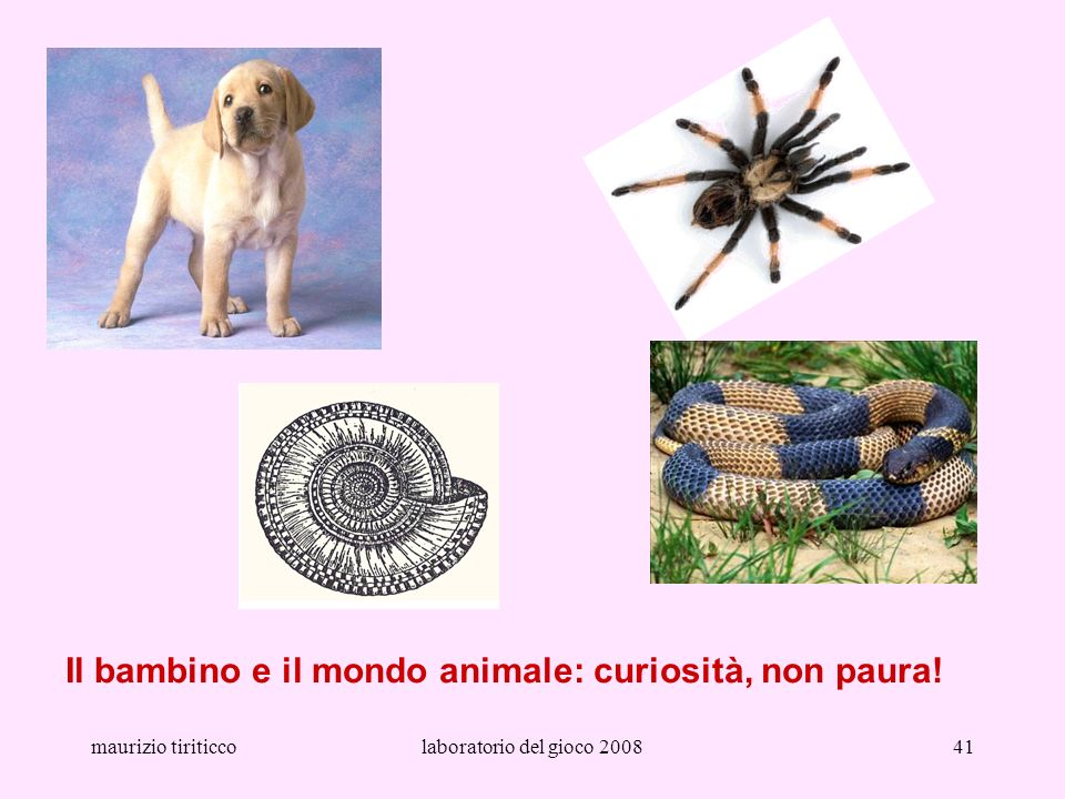 maurizio tiriticcolaboratorio del gioco 200841 Il bambino e il mondo animale: curiosità, non paura!