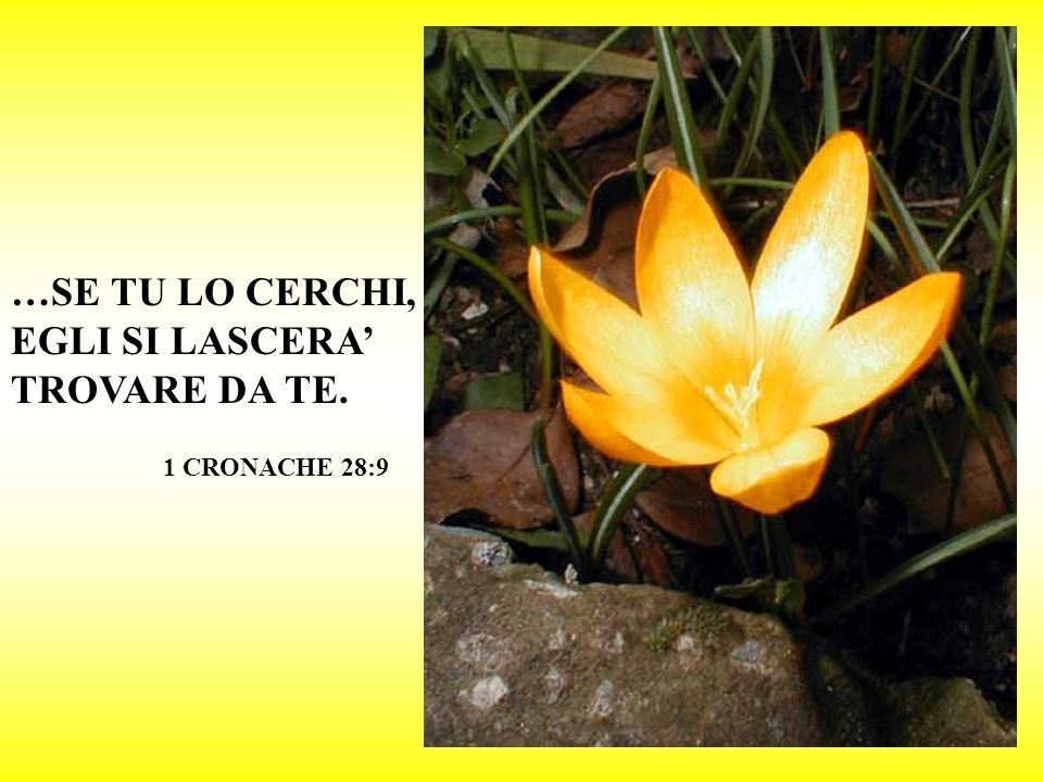RIMETTI LA TUA SORTE NELLETERNO; CONFIDA IN LUI ED EGLI OPERERA ! SALMO 37:5