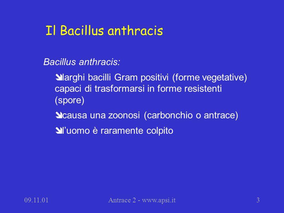 09.11.01Antrace 2 - www.apsi.it3 Bacillus anthracis: î larghi bacilli Gram positivi (forme vegetative) capaci di trasformarsi in forme resistenti (spo