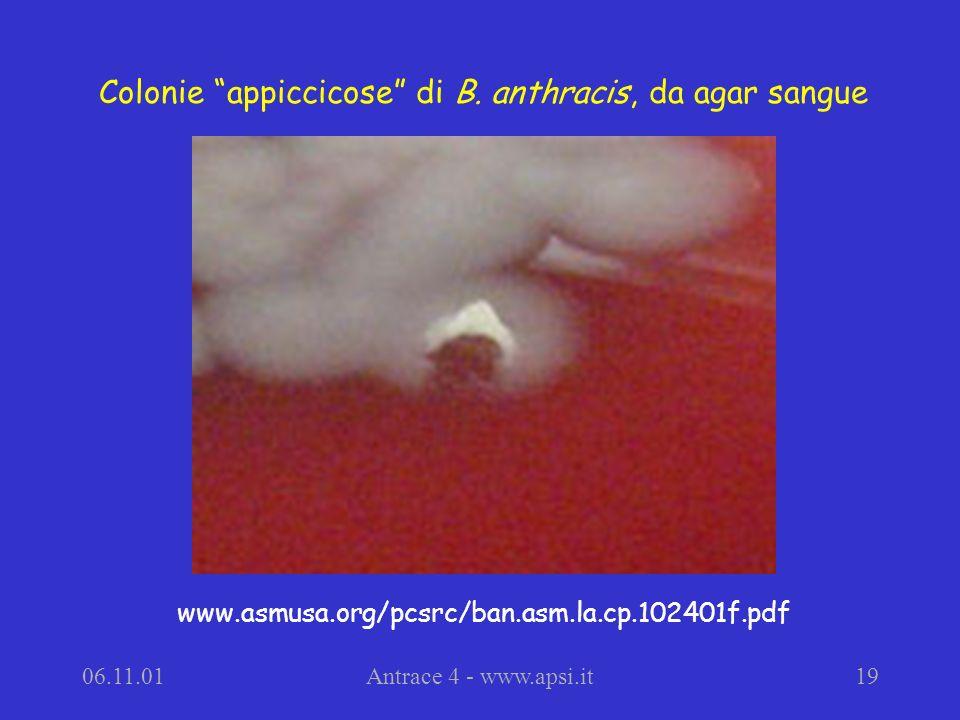 06.11.01Antrace 4 - www.apsi.it19 Colonie appiccicose di B.