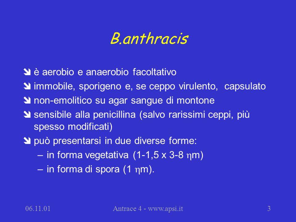 06.11.01Antrace 4 - www.apsi.it3 B.anthracis îè aerobio e anaerobio facoltativo îimmobile, sporigeno e, se ceppo virulento, capsulato înon-emolitico su agar sangue di montone îsensibile alla penicillina (salvo rarissimi ceppi, più spesso modificati) îpuò presentarsi in due diverse forme: –in forma vegetativa (1-1,5 x 3-8 m) –in forma di spora (1 m).