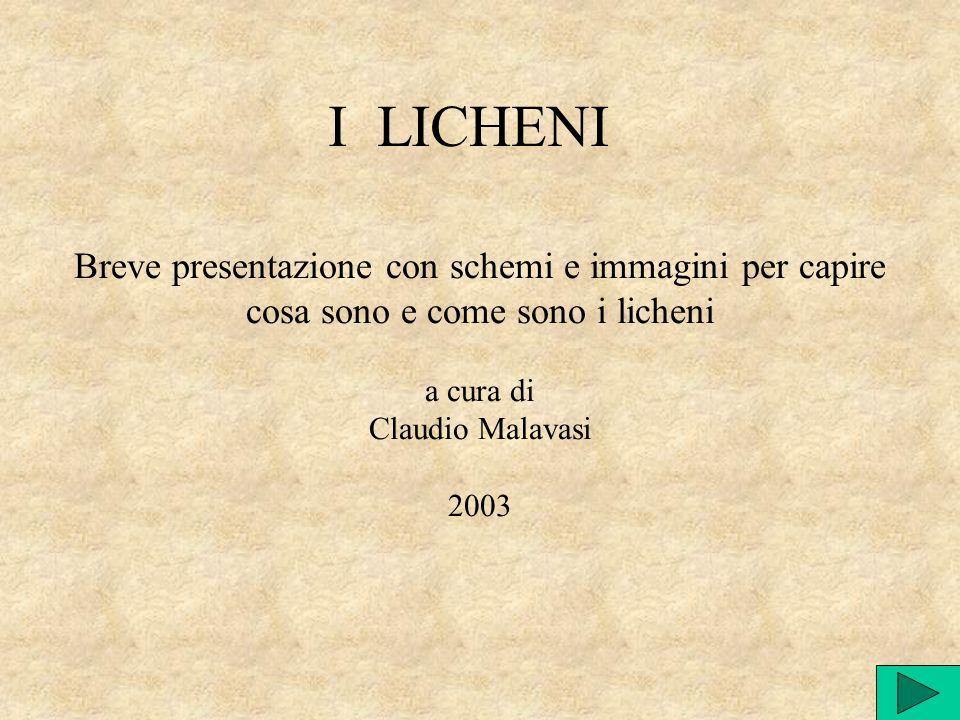 Breve presentazione con schemi e immagini per capire cosa sono e come sono i licheni a cura di Claudio Malavasi 2003 I LICHENI