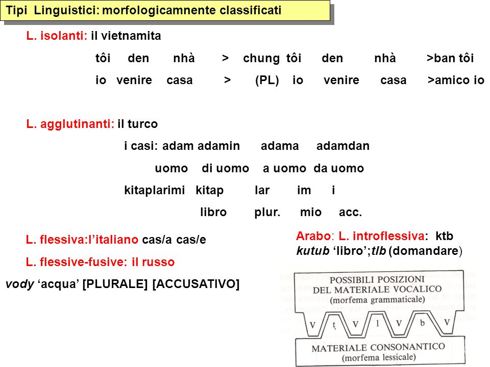 Tipi Linguistici: morfologicamnente classificati Arabo: L. introflessiva: ktb kutub libro;tlb (domandare) L. isolanti: il vietnamita tôi den nhà > chu
