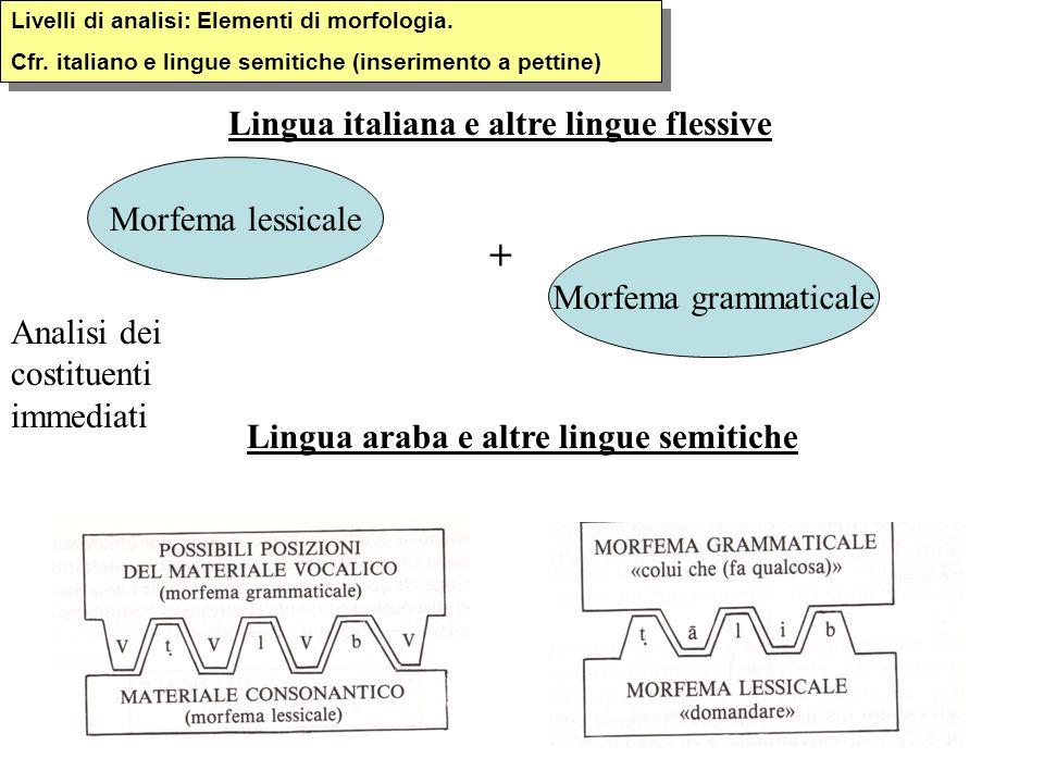 Livelli di analisi: Elementi di morfologia. Cfr. italiano e lingue semitiche (inserimento a pettine) Livelli di analisi: Elementi di morfologia. Cfr.