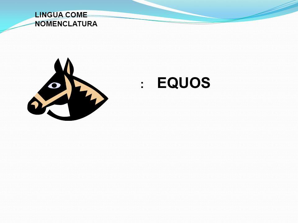 : EQUOS LINGUA COME NOMENCLATURA