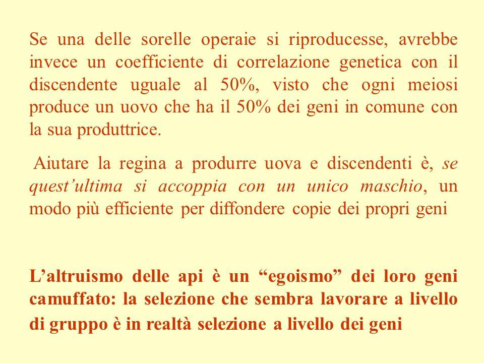 La chiave è nella riproduzione aplodiploide.