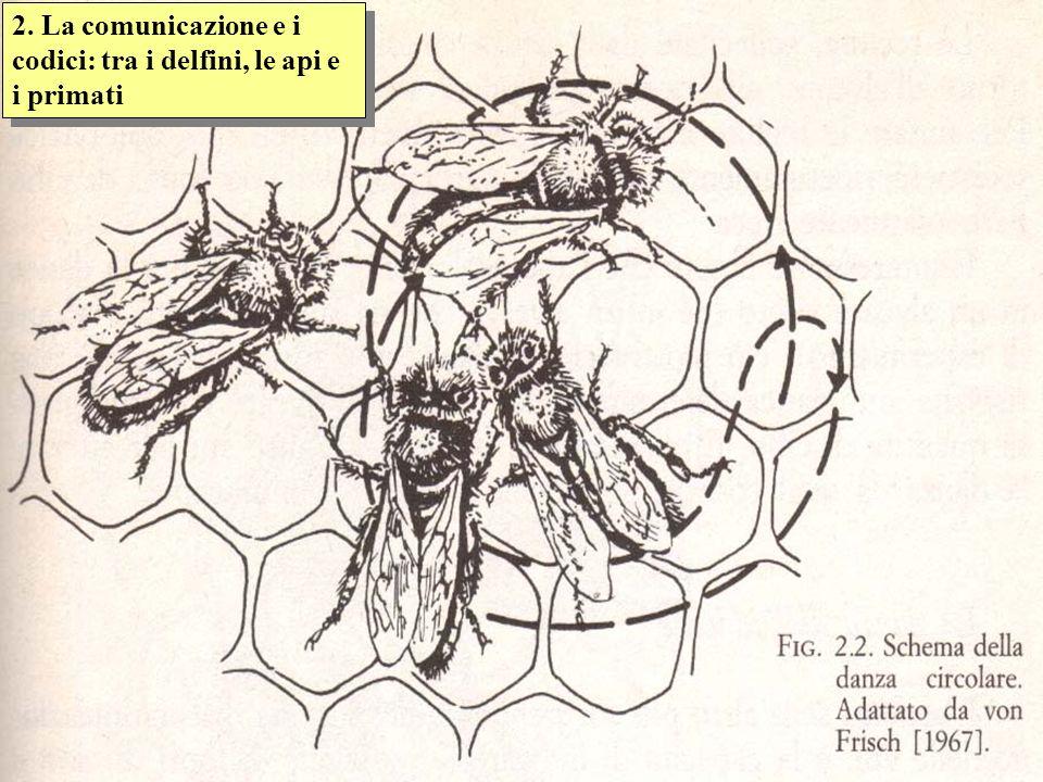 2. La comunicazione e i codici: tra i delfini, le api e i primati