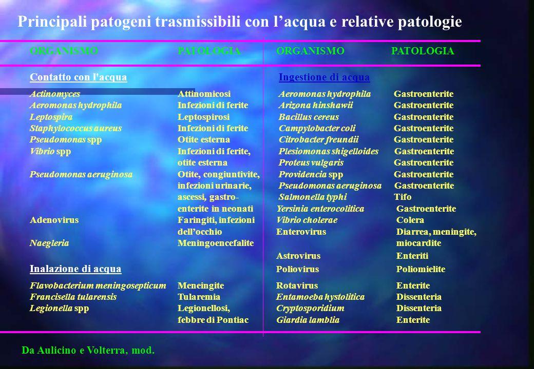 ORGANISMO PATOLOGIAORGANISMO PATOLOGIA Contatto con l'acqua Ingestione di acqua Actinomyces Attinomicosi Aeromonas hydrophila Gastroenterite Aeromonas