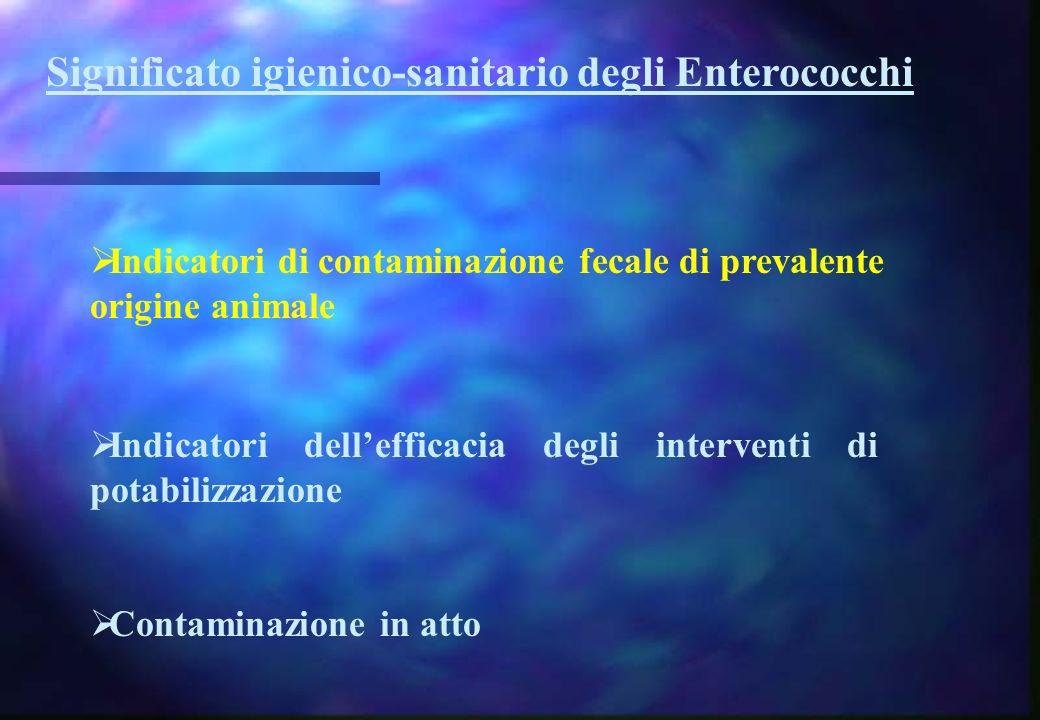Significato igienico-sanitario degli Enterococchi Indicatori di contaminazione fecale di prevalente origine animale Indicatori dellefficacia degli int