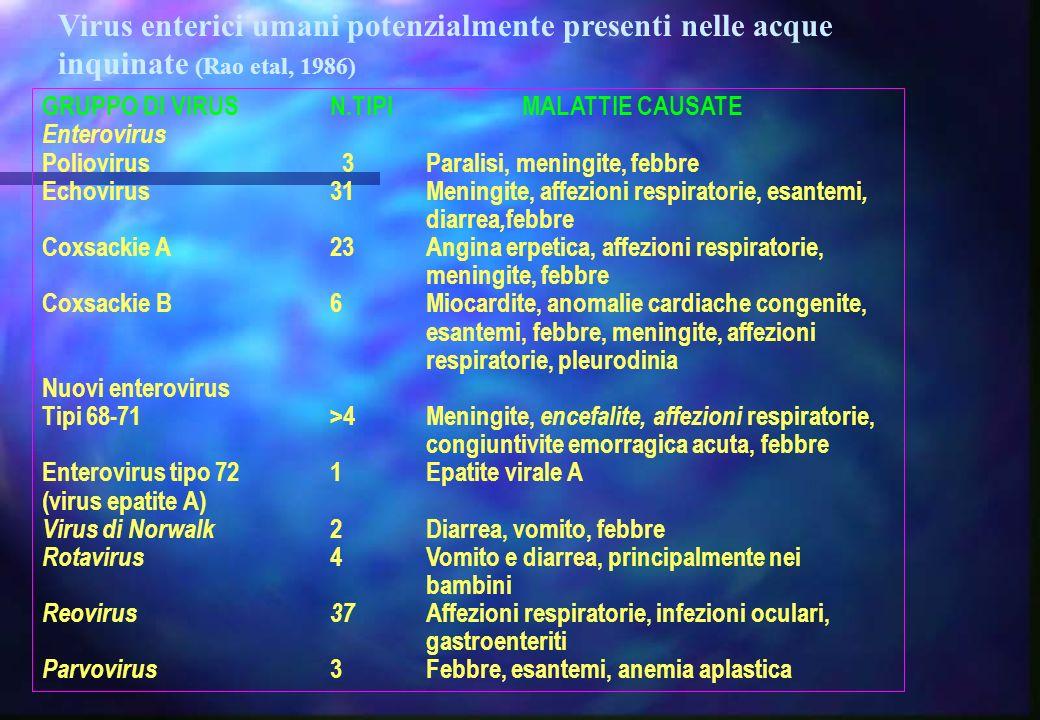 GRUPPO DI VIRUSN.TIPIMALATTIE CAUSATE Enterovirus Poliovirus 3Paralisi, meningite, febbre Echovirus31Meningite, affezioni respiratorie, esantemi, diar