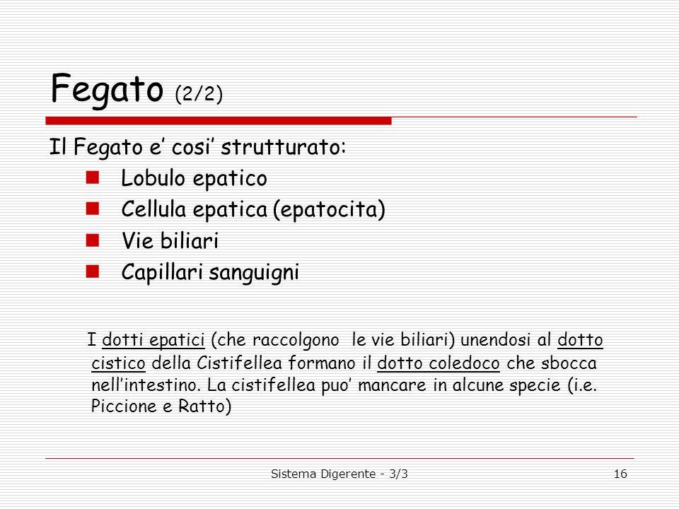 Sistema Digerente - 3/316 Fegato (2/2) Il Fegato e cosi strutturato: Lobulo epatico Cellula epatica (epatocita) Vie biliari Capillari sanguigni I dott