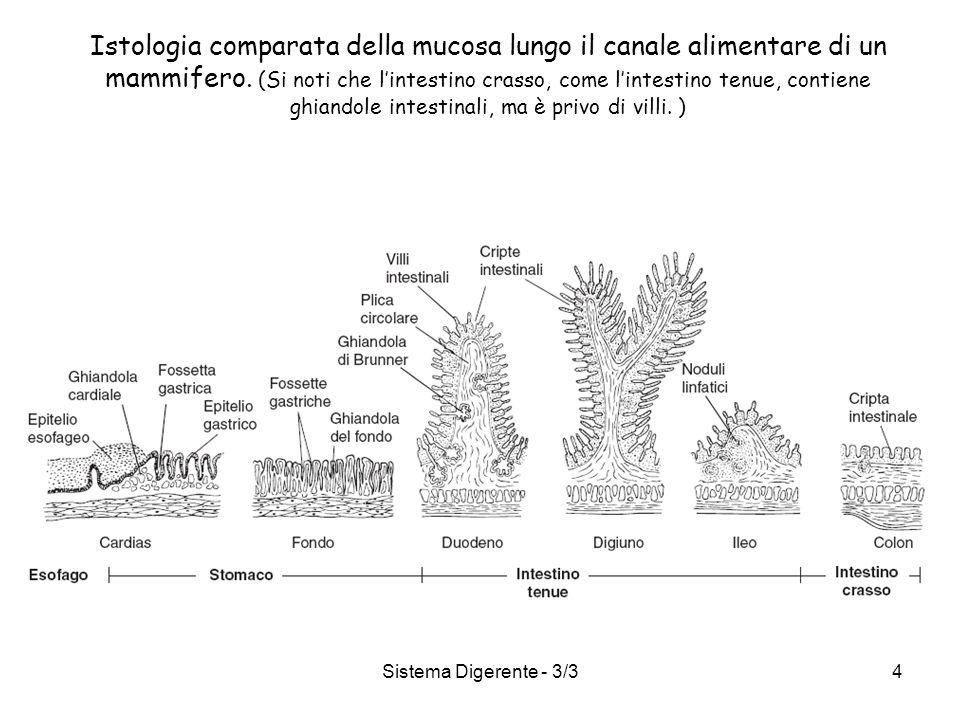 Sistema Digerente - 3/34 Istologia comparata della mucosa lungo il canale alimentare di un mammifero. (Si noti che lintestino crasso, come lintestino
