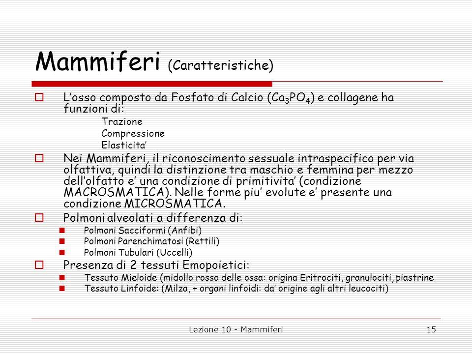 Lezione 10 - Mammiferi15 Mammiferi (Caratteristiche) Losso composto da Fosfato di Calcio (Ca 3 PO 4 ) e collagene ha funzioni di: Trazione Compression