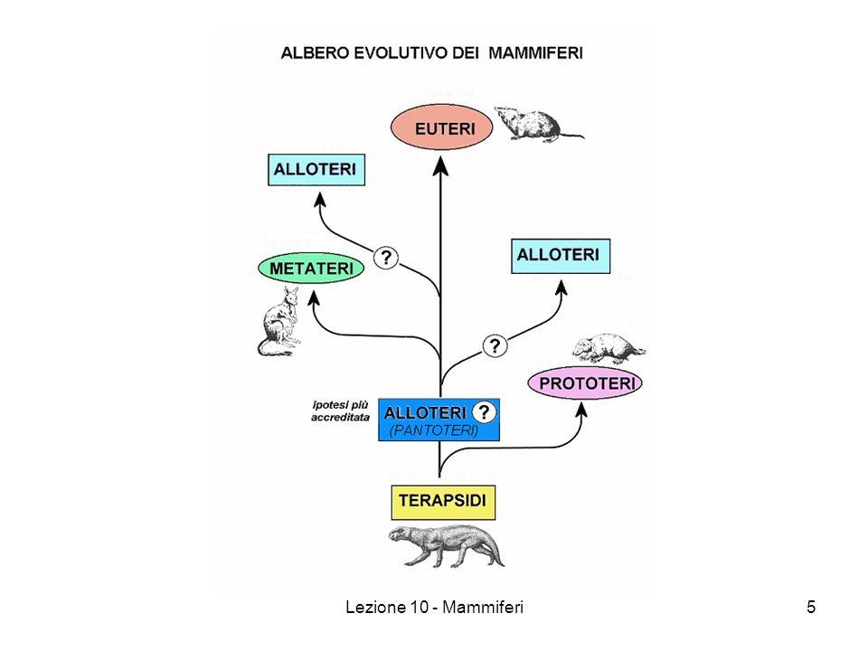 Lezione 10 - Mammiferi16 Mammiferi (Caratteristiche) Gruppi sanguigni: 0 – Donatore universale (no antigeni) AB – Accettore universale (no anticorpi) A B Rh (fattore + o -) Comunicazione con ultrasuoni Chirotteri Roditori Cetacei Vertebre cervicali in numero costante = 7 Ovipari (Monotremi) Ovovivipari (Marsupiali) Vivipari (Placentati)