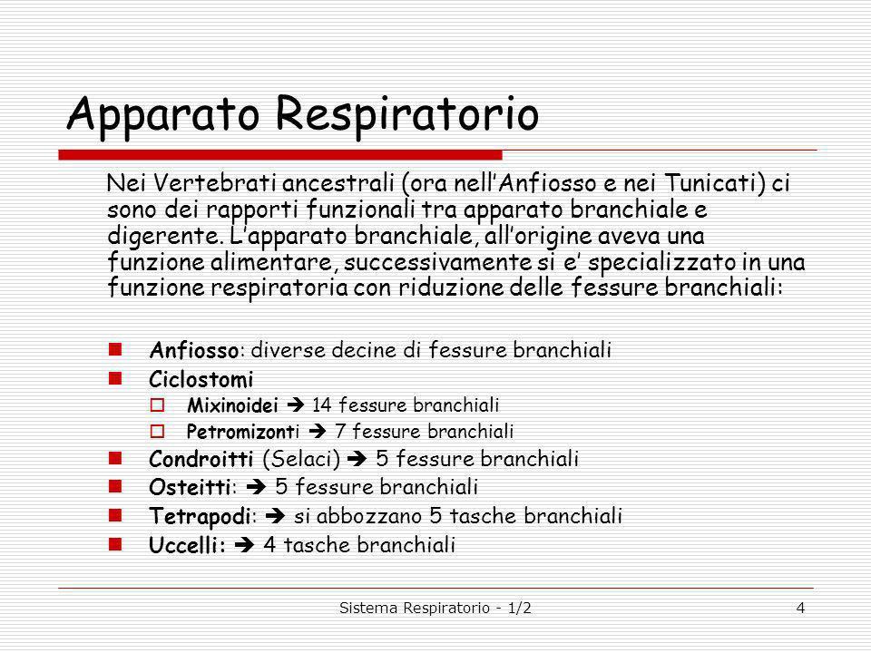 4 Apparato Respiratorio Nei Vertebrati ancestrali (ora nellAnfiosso e nei Tunicati) ci sono dei rapporti funzionali tra apparato branchiale e digerente.