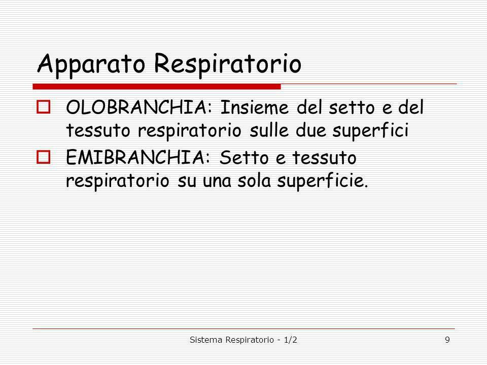 Sistema Respiratorio - 1/29 Apparato Respiratorio OLOBRANCHIA: Insieme del setto e del tessuto respiratorio sulle due superfici EMIBRANCHIA: Setto e tessuto respiratorio su una sola superficie.
