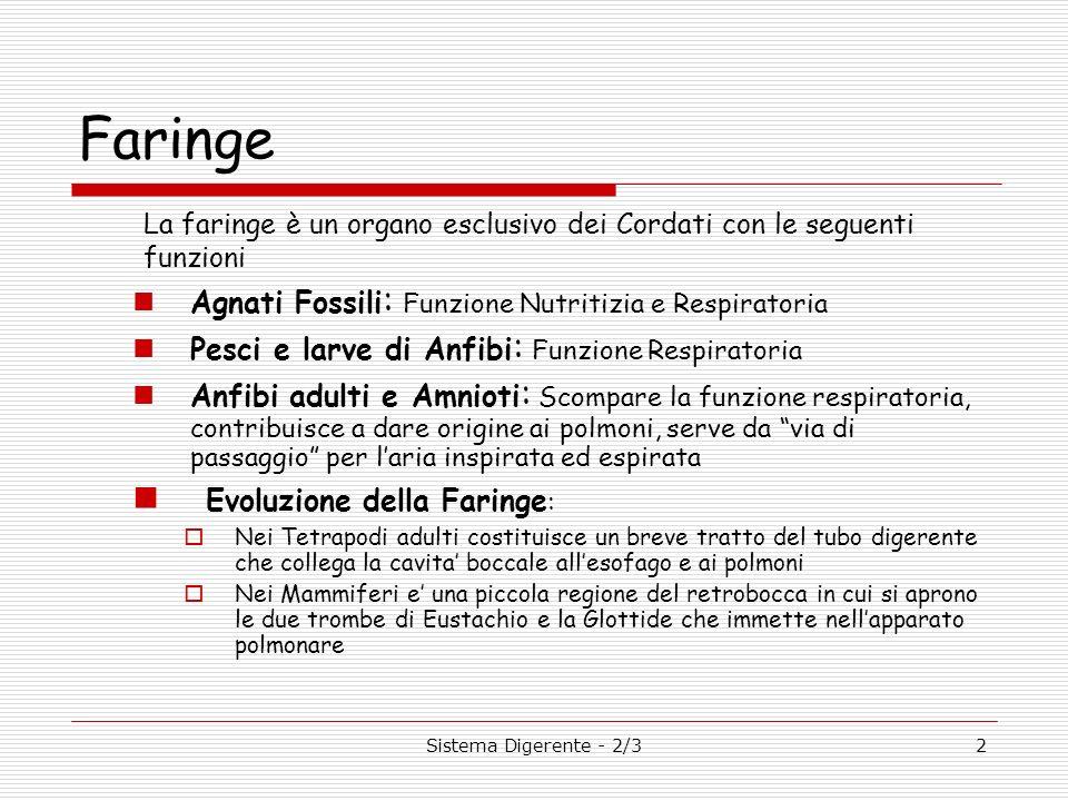 Sistema Digerente - 2/32 Faringe La faringe è un organo esclusivo dei Cordati con le seguenti funzioni Agnati Fossili : Funzione Nutritizia e Respirat