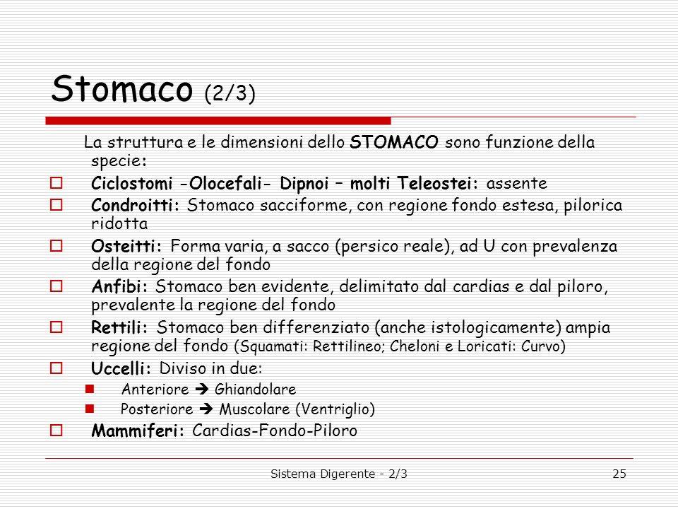 Sistema Digerente - 2/325 Stomaco (2/3) La struttura e le dimensioni dello STOMACO sono funzione della specie: Ciclostomi -Olocefali- Dipnoi – molti T