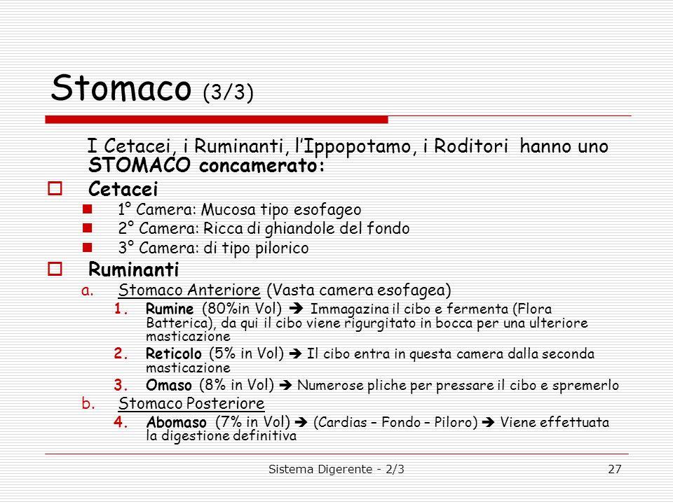 Sistema Digerente - 2/327 Stomaco (3/3) I Cetacei, i Ruminanti, lIppopotamo, i Roditori hanno uno STOMACO concamerato: Cetacei 1° Camera: Mucosa tipo