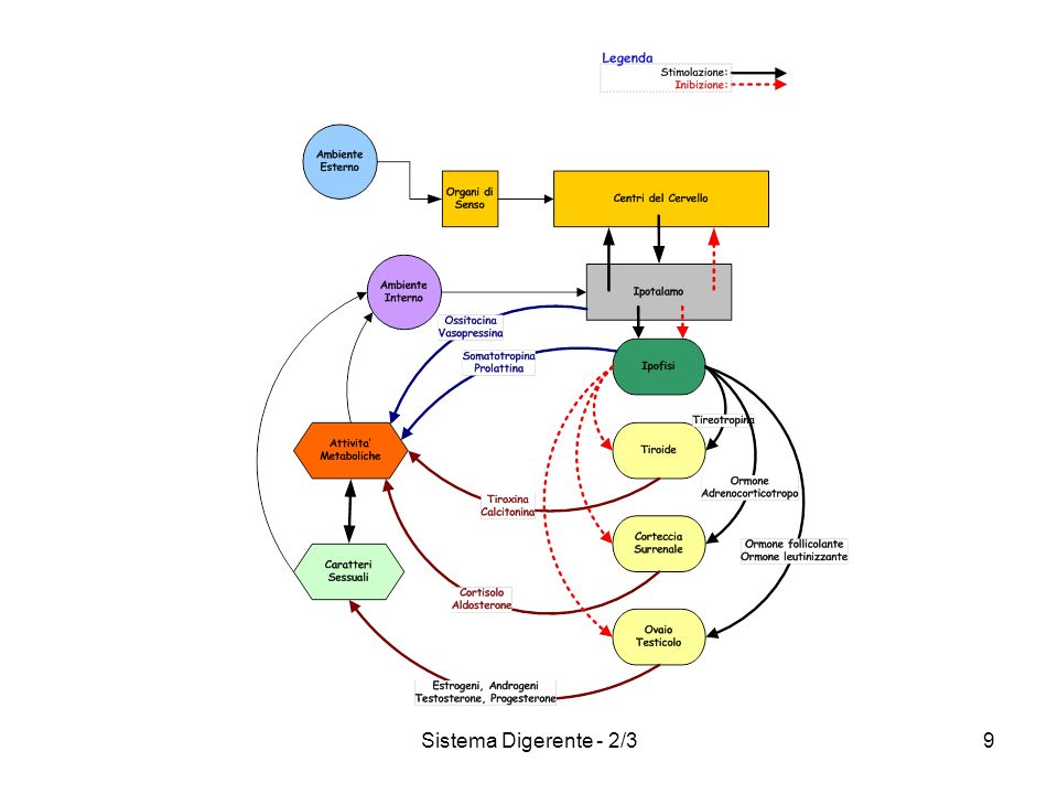 Sistema Digerente - 2/39