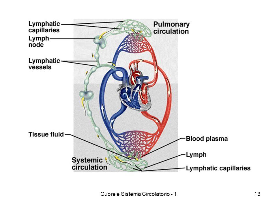 Cuore e Sistema Circolatorio - 113