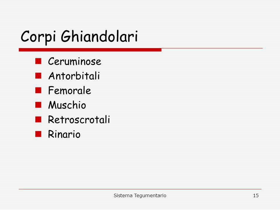 Sistema Tegumentario15 Corpi Ghiandolari Ceruminose Antorbitali Femorale Muschio Retroscrotali Rinario