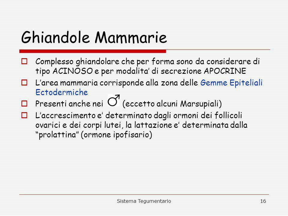 Sistema Tegumentario16 Ghiandole Mammarie Complesso ghiandolare che per forma sono da considerare di tipo ACINOSO e per modalita di secrezione APOCRIN