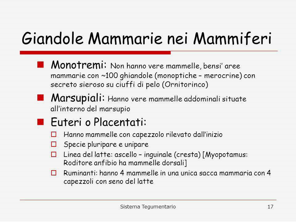 Sistema Tegumentario17 Giandole Mammarie nei Mammiferi Monotremi: Non hanno vere mammelle, bensi aree mammarie con ~100 ghiandole (monoptiche – merocr