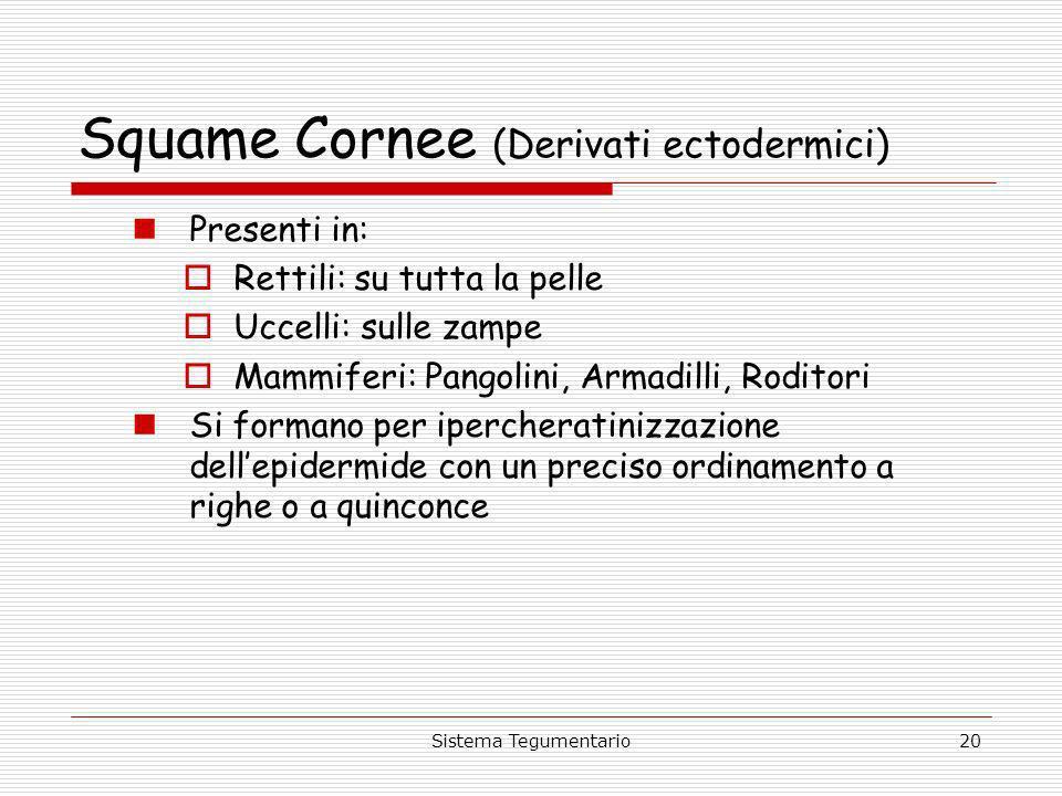 Sistema Tegumentario20 Squame Cornee (Derivati ectodermici) Presenti in: Rettili: su tutta la pelle Uccelli: sulle zampe Mammiferi: Pangolini, Armadil