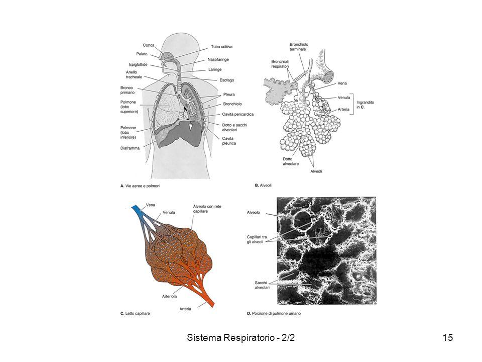Sistema Respiratorio - 2/215