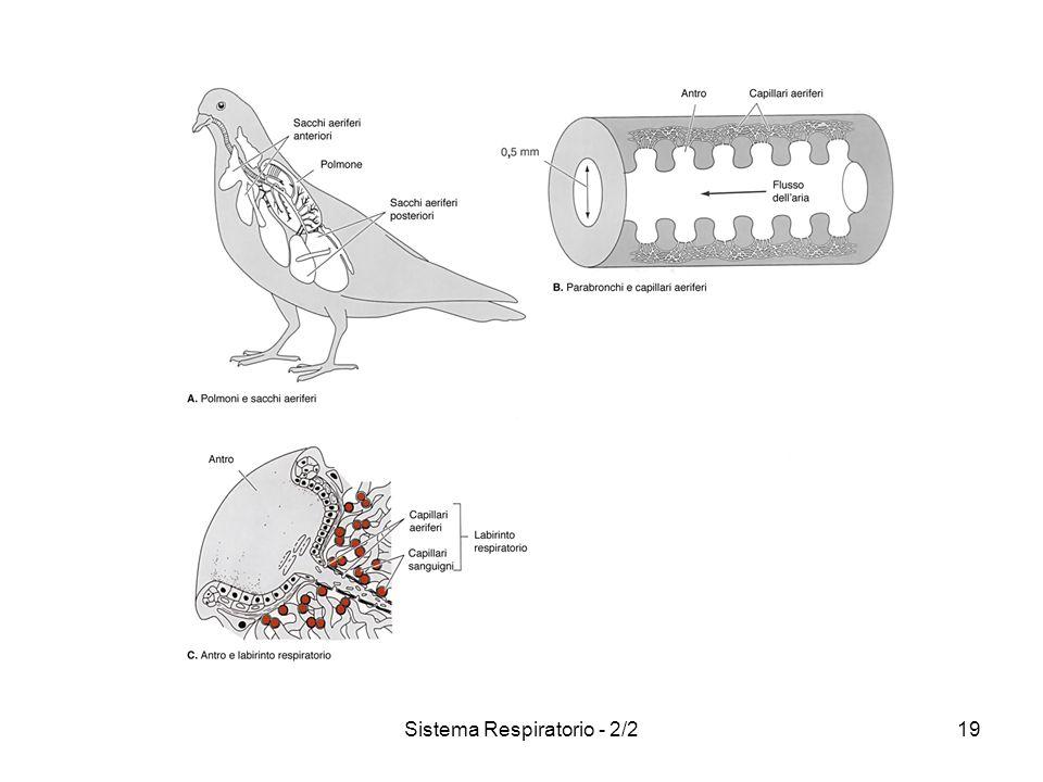 Sistema Respiratorio - 2/219