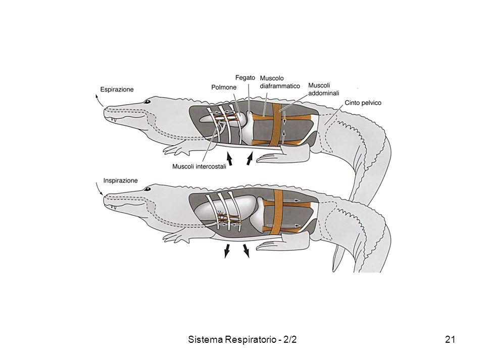 Sistema Respiratorio - 2/221