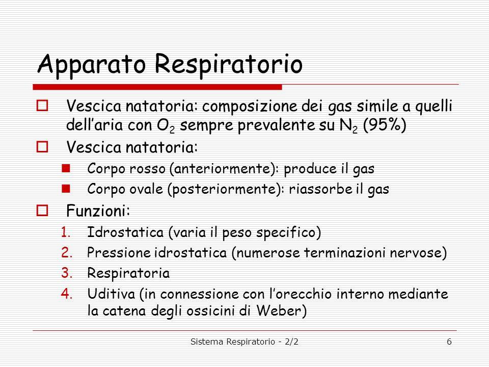 Sistema Respiratorio - 2/26 Apparato Respiratorio Vescica natatoria: composizione dei gas simile a quelli dellaria con O 2 sempre prevalente su N 2 (9