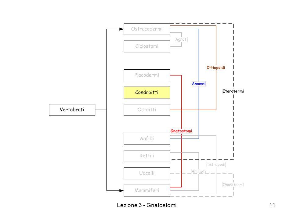 Lezione 3 - Gnatostomi11