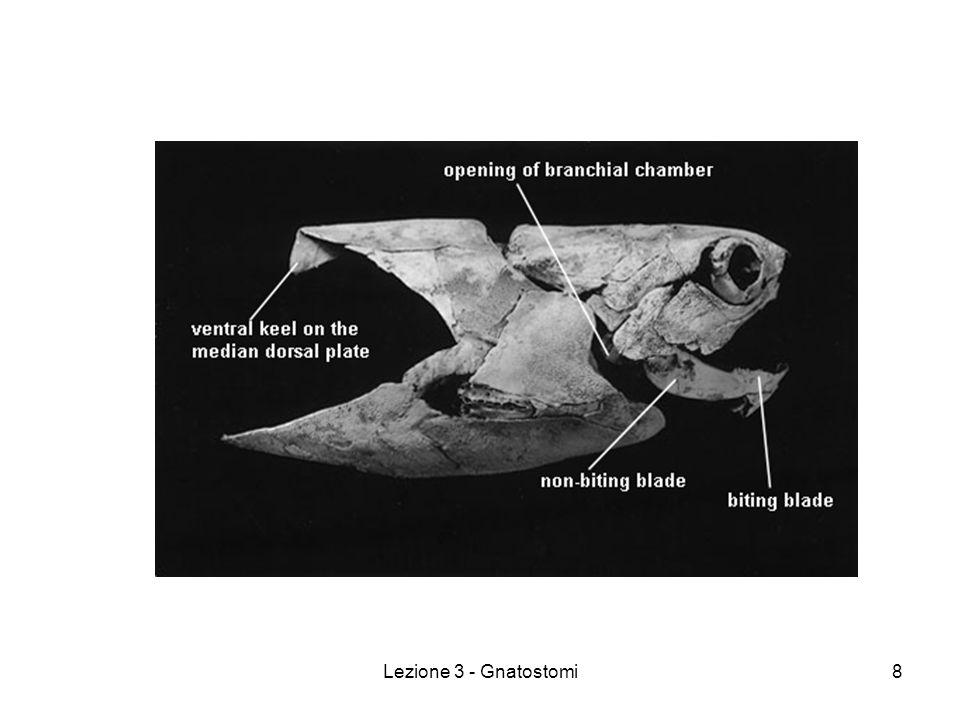Lezione 3 - Gnatostomi19