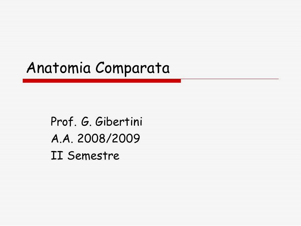 Anatomia Comparata Prof. G. Gibertini A.A. 2008/2009 II Semestre
