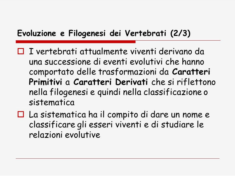 Evoluzione e Filogenesi dei Vertebrati (2/3) I vertebrati attualmente viventi derivano da una successione di eventi evolutivi che hanno comportato del