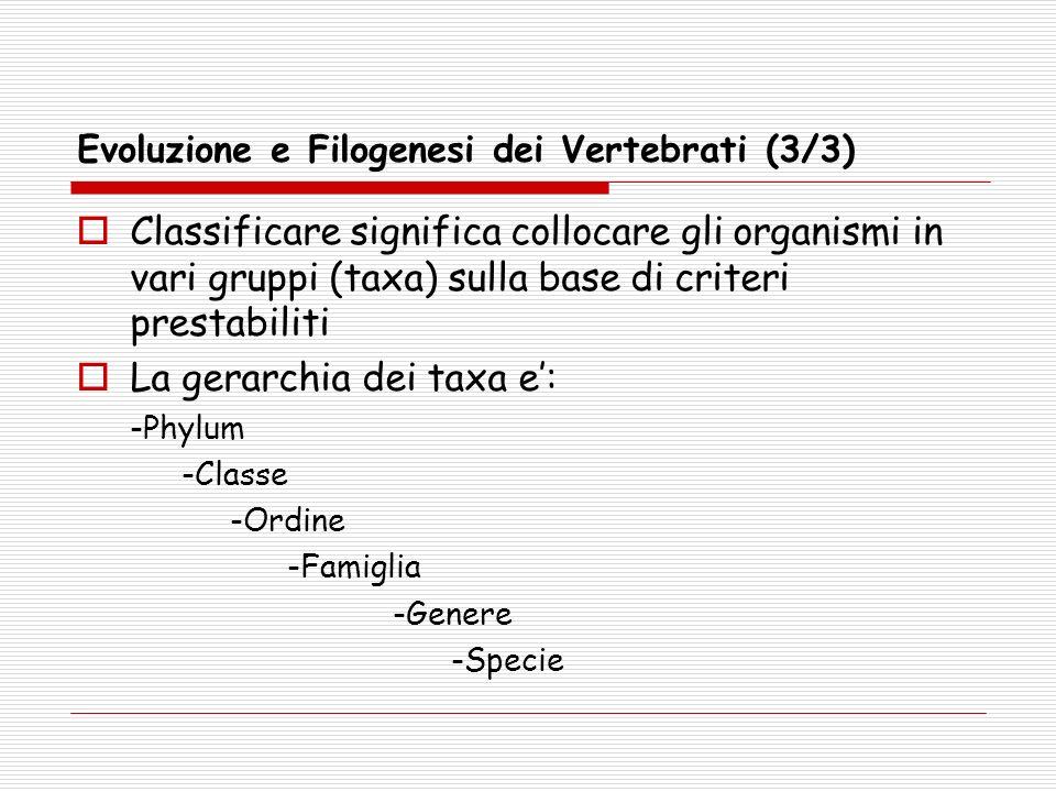 Evoluzione e Filogenesi dei Vertebrati (3/3) Classificare significa collocare gli organismi in vari gruppi (taxa) sulla base di criteri prestabiliti L