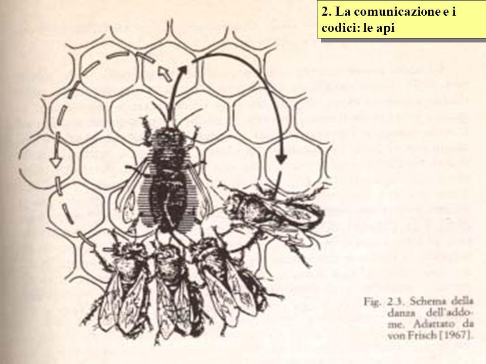 2. La comunicazione e i codici: le api