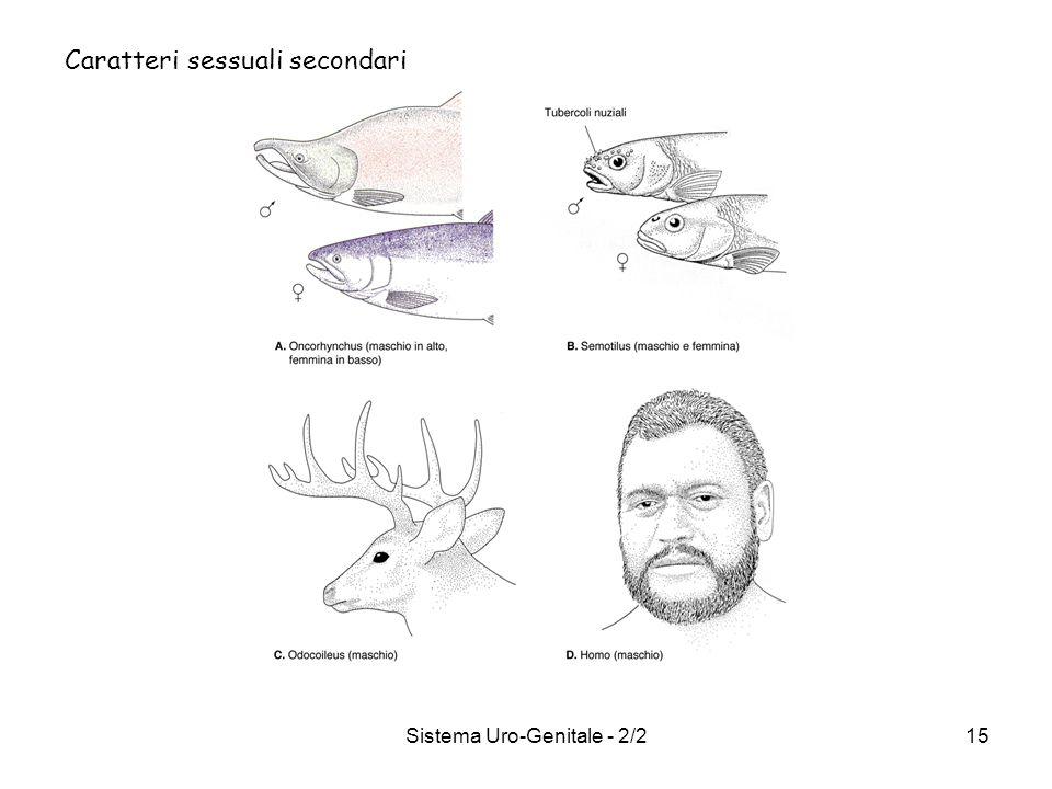 Sistema Uro-Genitale - 2/215 Caratteri sessuali secondari